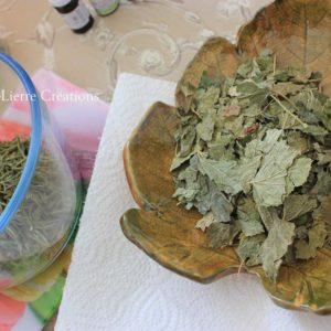 CASSIS feuilles (Tisane en vrac)