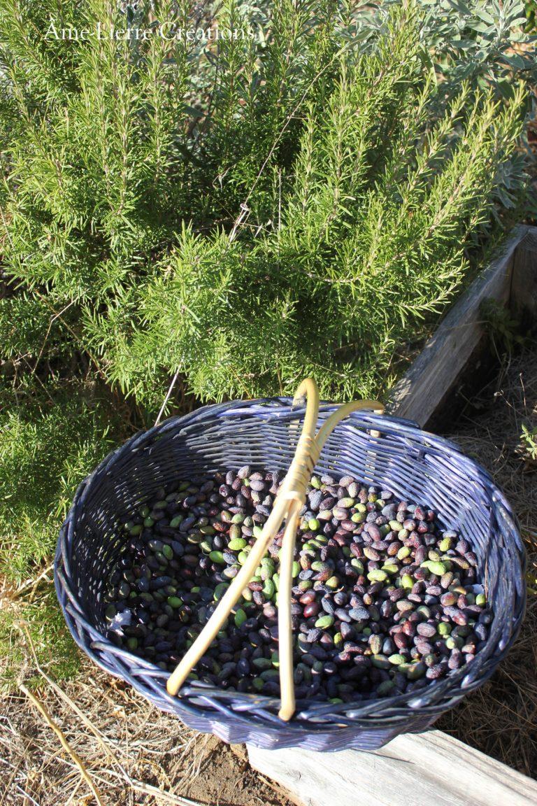 oliveromarin