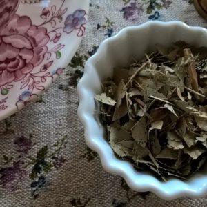 Frêne Fraxinus exelsior plante en vrac feuilles